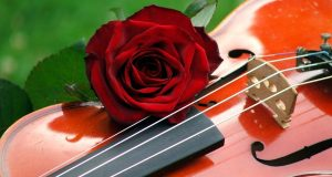 violin_rose_by_lillybat