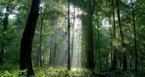 bialowieza_forest_c_tomasz_wilk_0