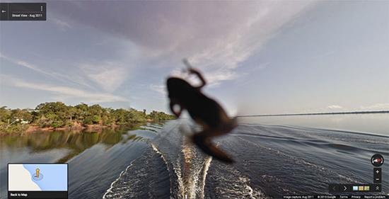 بهترین عکسهای اتفاقی «گوگل استریت ویو» از حیوانات