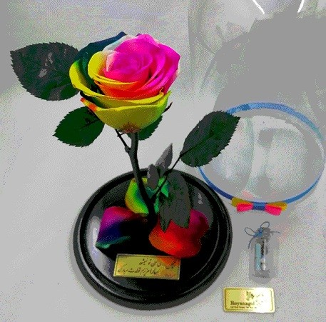 گل رز چند رنگ